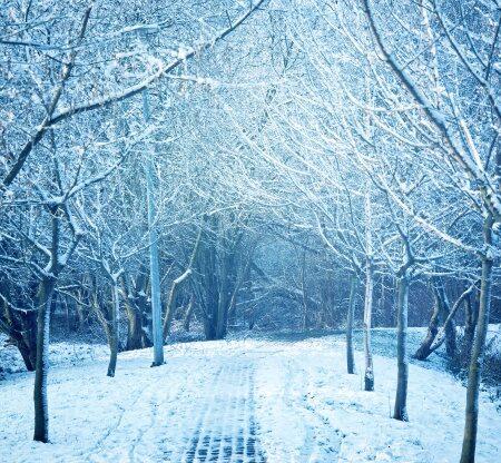 Shiatsu for Winter Wellness